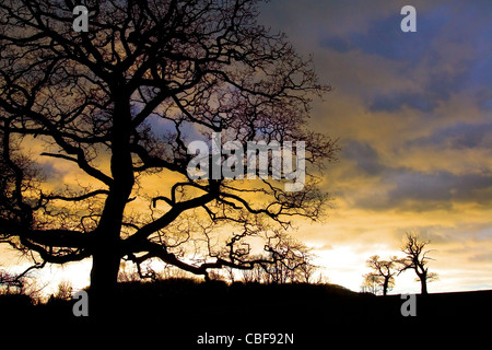 sunset, trees, Gatcombe, Isle of Wight, England, UK - Stock Photo
