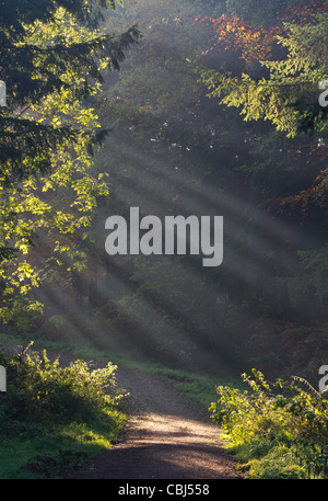 Early morning sunrays through trees - Stock Photo