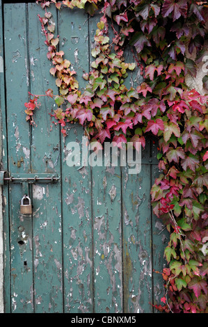 Rustic Old Garden Shed Covered In Ivy With A Fork And