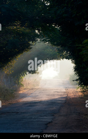 Tunnel of trees in the Indian countryside. Andhra Pradesh, India - Stock Photo