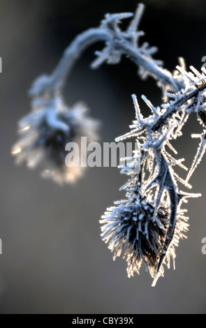 Big chill - Hoar frost on plants - Stock Photo