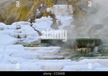 Steam rising from colorful travertine terrace and pools. Mammoth Hot Springs, Yellowstone National Park, Wyoming, - Stock Photo