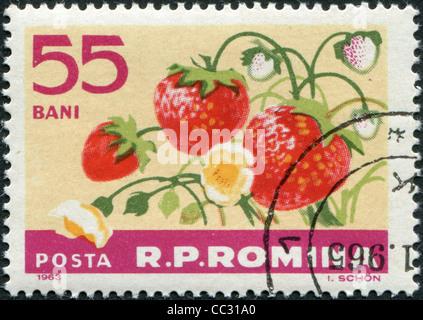 ROMANIA - CIRCA 1963: A stamp printed in the Romania, shows the Garden strawberry (Fragaria ananassa), circa 1963 - Stock Photo