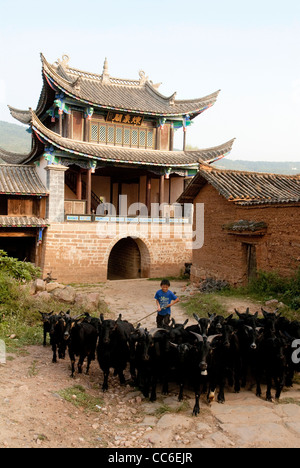 Boy herding black goat, Lufeng, Chuxiong, Yunnan , China - Stock Photo