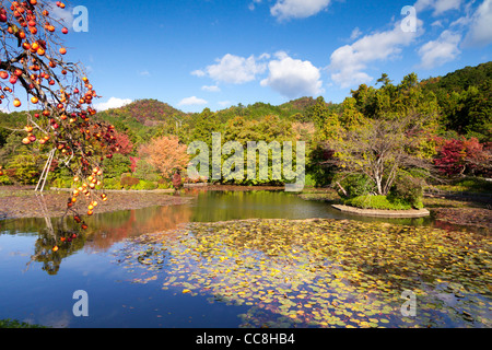 Kyoyochi Pond in the grounds of Ryoan-ji temple, Kyoto, Japan, seen in Autumn. - Stock Photo