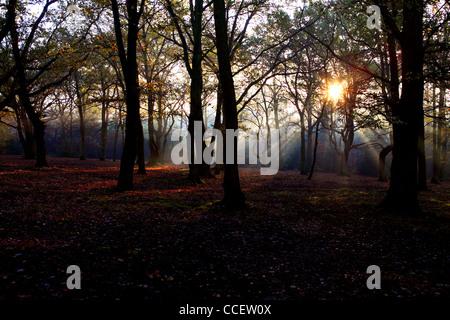 Sun shining through trees in Autumn time - Stock Photo