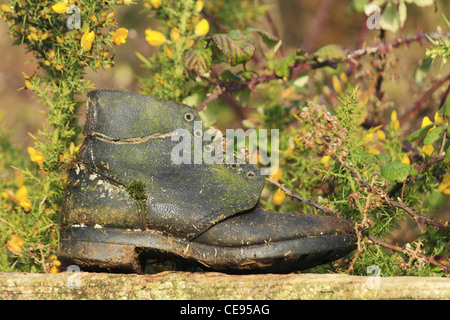 An old worn out black leather shoe boot with moss grass growing on in it a wooden timber wood fence gate - Stock Photo