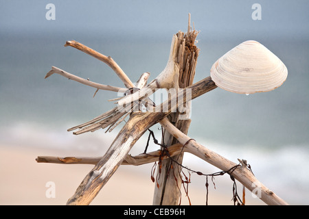Art trouve - Driftwood sculpture with clam shell - Stock Photo