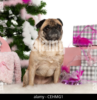 Pug, 4 years old, sitting with Christmas tree and gifts in front of white background - Stock Photo