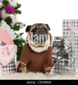 Pug, 6 years old, sitting with Christmas tree and gifts in front of white background - Stock Photo