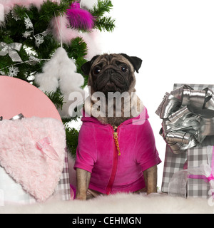 Pug, 3 years old, sitting with Christmas tree and gifts in front of white background - Stock Photo