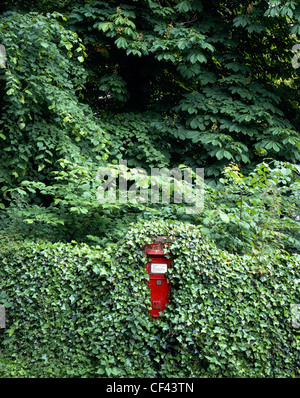 An ivy-clad rural letterbox against a flourishing leafy background. - Stock Photo