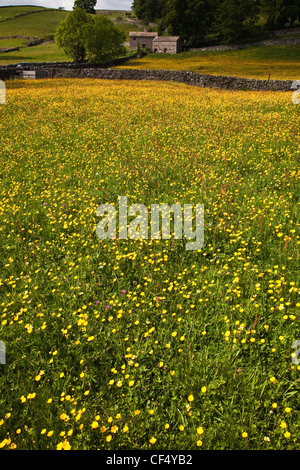Wild Flower Meadow above Askrigg village, Wensleydale in the Yorkshire Dales. - Stock Photo