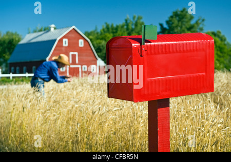 Close up of rural mailbox with red barn and farmer checking spring wheat in the background, Grande Pointe, Manitoba, - Stock Photo