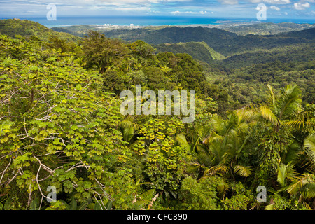 EL YUNQUE NATIONAL FOREST, PUERTO RICO - Rain forest jungle canopy landscape and coast near Luquillo - Stock Photo