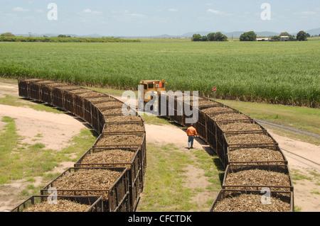 Machine-cut sugar cane in rail trucks outside mill, Ayr, Queensland, Australia, Pacific - Stock Photo