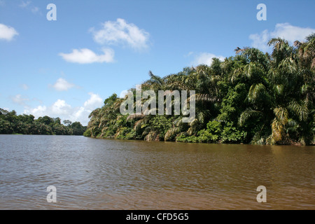 Lagoon in Tortuguero National Park, Costa Rica - Stock Photo