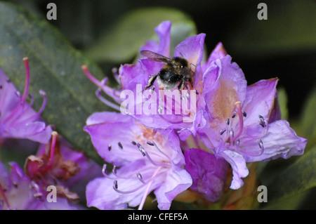Bee working on flower - Stock Photo