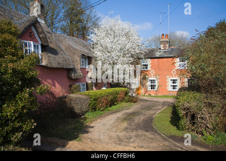 Thatched house red brick cottage with spring blossom, Grundisburgh, Suffolk, England - Stock Photo