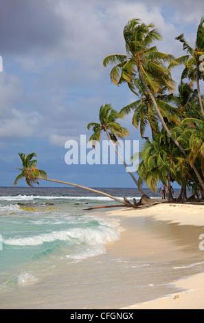 Palm trees on the beach, Filitheyo island, Maldives - Stock Photo