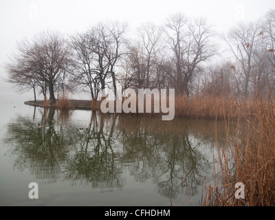 Foggy morning along the lake during winter in Prospect Park, Brooklyn, New York. - Stock Photo