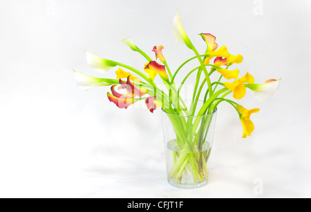 callas on a glass jar - Stock Photo