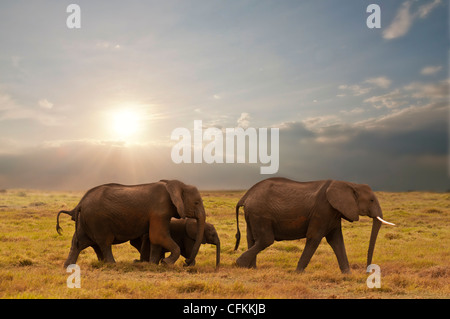 elephant family in amboseli national park, kenya - Stock Photo