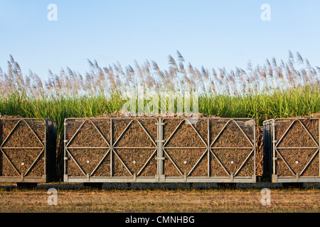 Loaded sugar cane bins ready to be transported to a mill. Cairns, Queensland, Australia - Stock Photo