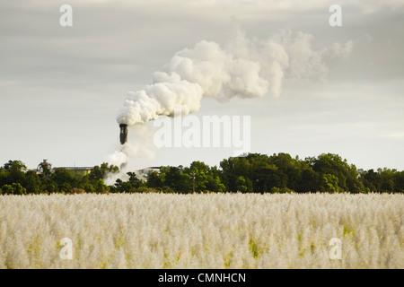 View across sugar cane field to smoke stack of the Mulgrave Sugar Mill. Gordonvale, Queensland, Australia - Stock Photo