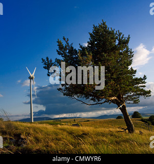 Tree windswept, wind turbine.  Auvergne. France. Europe. - Stock Photo