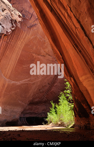 Backpacker in Coyote Gulch, a tributary of the Escalante River in Southern Utah. - Stock Photo