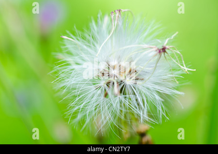 weed in the miracle nature or in the garden - Stock Photo