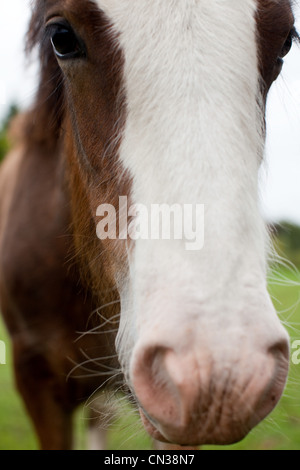 Horse's face close up - Stock Photo