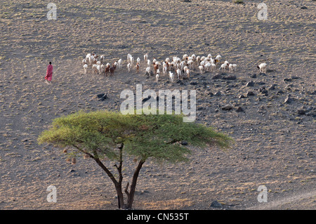Tanzania, Arusha Region, Rift Valley, surroundings of lake Natron, Maasai shepherd - Stock Photo