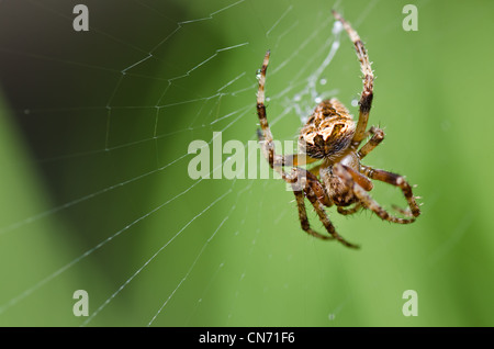 spider in nature or in the garden - Stock Photo