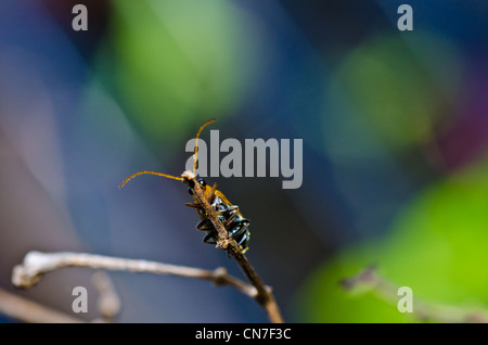 orange beetle in green nature or the garden - Stock Photo