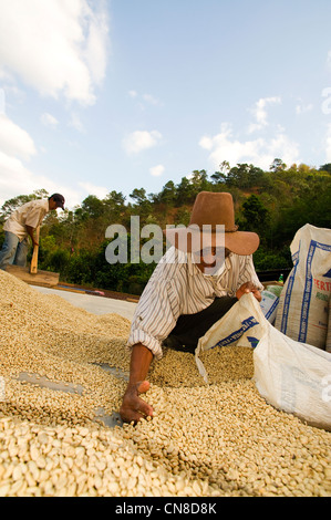 Coffee is dried on patios - Stock Photo