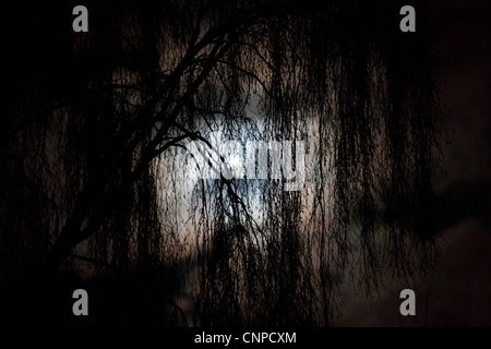 A full moon shines through the cloud and trees in a wood at night - Stock Photo