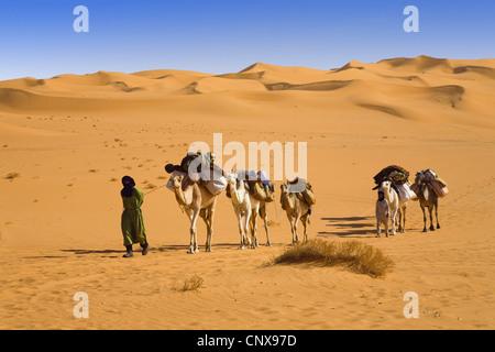 dromedary, one-humped camel (Camelus dromedarius), small caravan in the Libyan desert, Libya, Sahara - Stock Photo