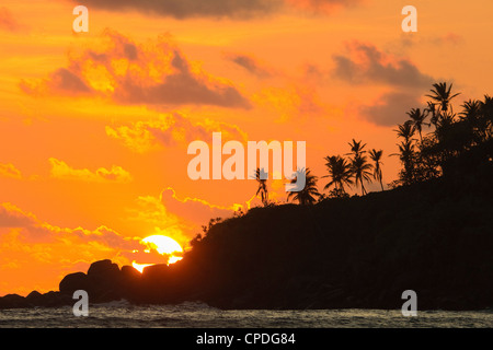 Sunset and palm trees on the western point of the south coast surf beach at Mirissa, near Matara, Southern Province, - Stock Photo