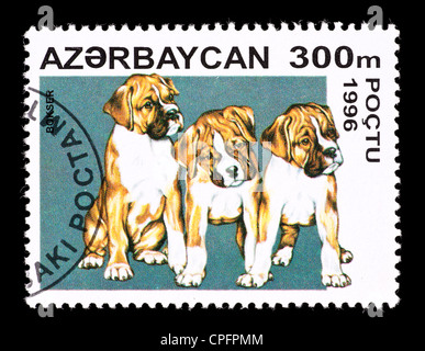 Postage stamp from Azerbaijan depicting boxer puppies - Stock Photo