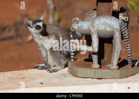 wild ring-tailed lemur (Lemur catta) posing with wooden carving of ring-tailed lemur - Stock Photo