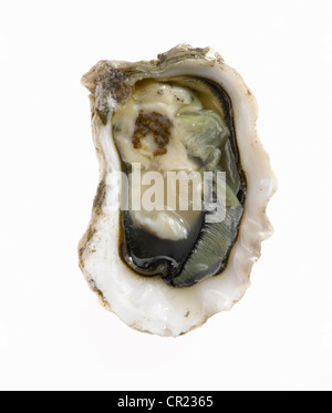 oyster on the half shell - Stock Photo