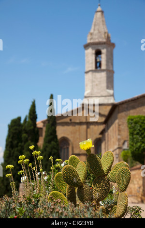 Close up of cactus plant by church - Stock Photo