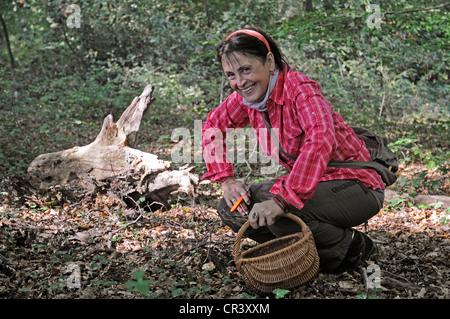 Woman, 50-55 years, picking mushrooms in the forest, mushrooms, basket, Iserlohn, Sauerland region, North Rhine - Stock Photo
