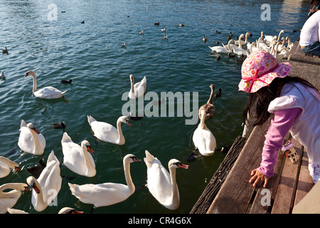 Switzerland, Zurich, the Zurich lake, young girl feeding swans - Stock Photo