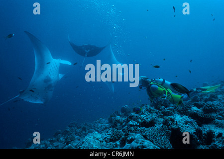 Scuba divers observing Manta Rays (Manta birostris), Ari Atoll, Maldives, Indian Ocean, Asia - Stock Photo
