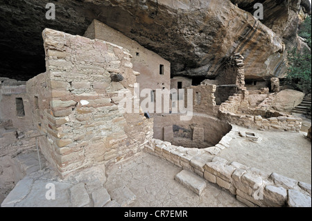 Spruce Tree House, cliff dwelling of the native Americans, about 800 years old, Mesa Verde National Park - Stock Photo