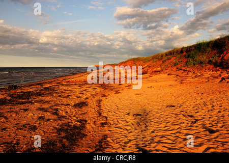 Red sandstone cliffs and beaches, typical coastline in Prince Edward Island National Park, Prince Edward Island, - Stock Photo