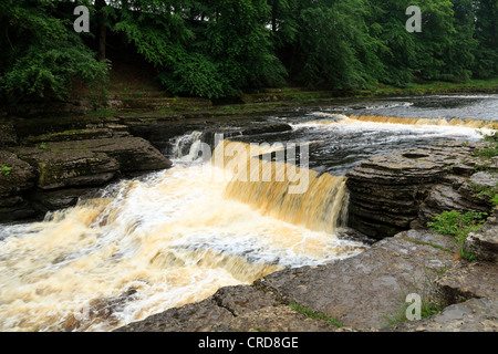 Aysgarth Falls, Wensleydale, Yorkshire. The Lower Falls on the River Ure. - Stock Photo
